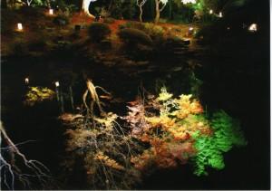 松島円通院「池の中の世界」