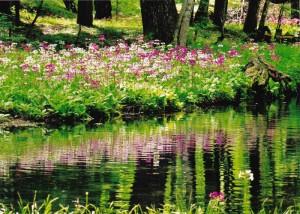 高原の花群生