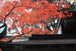 秋早朝の神社
