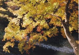 初秋の輝き
