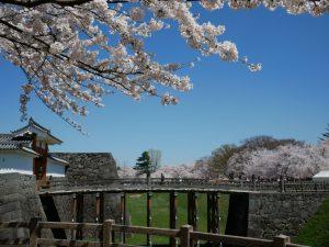 霞城本丸と桜