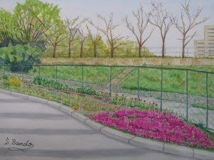 枚方二中プール跡地の菜園(芝桜)を描く