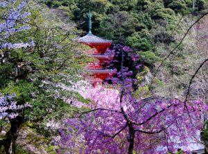 春の岐阜公園