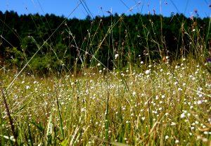初秋の湿原